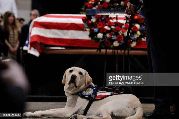 TOPSHOT Sully the service dog lies next to the casket while people pay respects as the remains of former US President George H W Bush lie in state in...