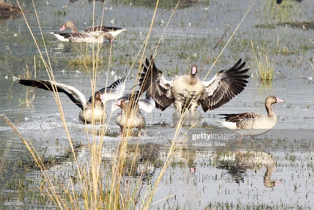 Sultanpur National Park has already over 200 bird species despite the late onset of winter and more birds are expected to fly in as temperature drops on December 9, 2015 in Gurgaon, India. Sultanpur National Park is a bird paradise for bird watchers. It is known for its migratory and resident birds.