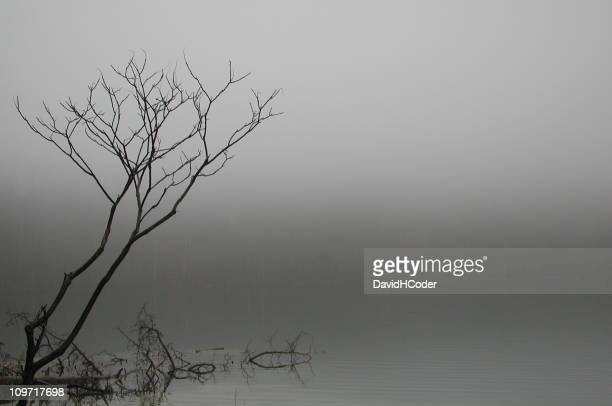 Sumac Tree Above Foggy Pond