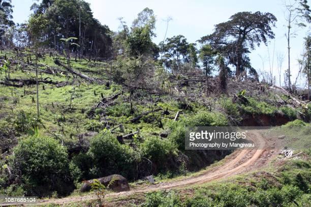 sumatra deforestation - fire ape stock-fotos und bilder
