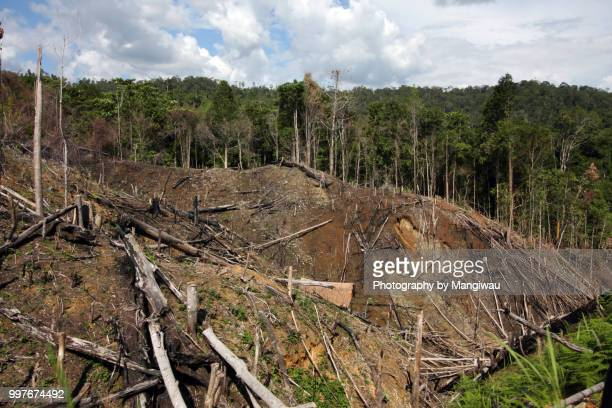 sumatra deforestation - landslide stock pictures, royalty-free photos & images