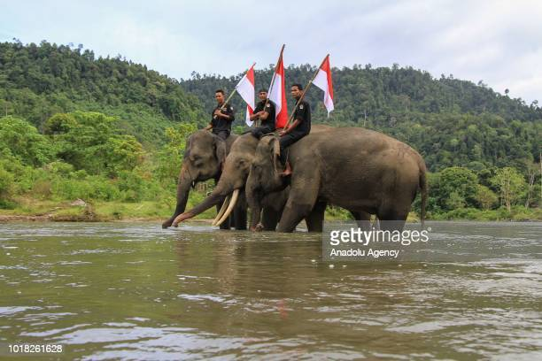 Sumatran elephants carry the Red and White Flag down to Sarah Deu river on the 73rd anniversary of the Republic of Indonesia at the Sampoiniet...