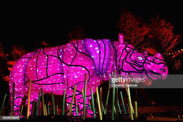 Sumatran Rhino light sculpture is seen during a media preview of Vivid Sydney illuminated displays at Taronga Zoo on May 24 2016 in Sydney Australia...
