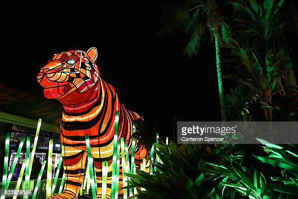 Sumatran Tiger light sculpture is displayed during a media preview of Vivid Sydney illuminated displays at Taronga Zoo on May 24 2016 in Sydney...