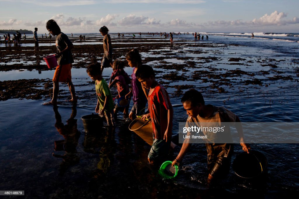 Sumbanese people collect sea worms during Nyale ritual as part of the pasola war festival at Wainyapu village on March 23, 2014 in Sumba Island, Indonesia. The Pasola Festival is an important annual event to welcome the new harvest season, which coincides with the arrival of 'Nyale' sea worms during February or March each year. Pasola, an ancient ritual fighting game, involves two teams of men on horseback charging towards each other while trying to hit their rivals with 'pasol' javelins and avoid being hit themselves.