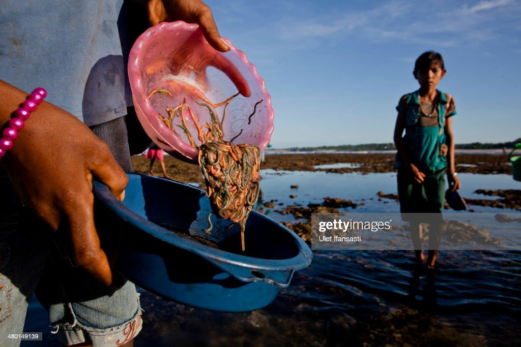 A Sumbanese woman showing a bowl of sea worms during Nyale ritual as part of the pasola war festival at Wainyapu village on March 23, 2014 in Sumba Island, Indonesia. The Pasola Festival is an important annual event to welcome the new harvest season, which coincides with the arrival of 'Nyale' sea worms during February or March each year. Pasola, an ancient ritual fighting game, involves two teams of men on horseback charging towards each other while trying to hit their rivals with 'pasol' javelins and avoid being hit themselves.