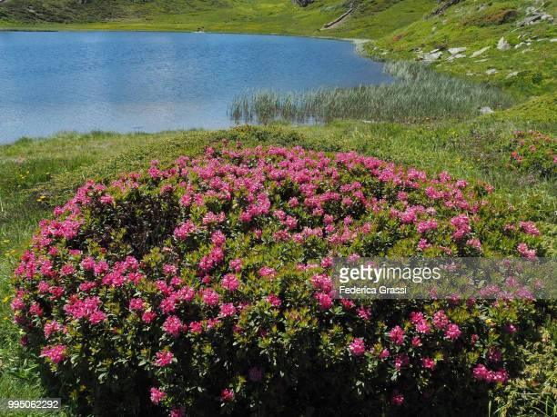Summer At Simplon Pass, Switzerland