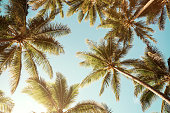 Summer background. Low angle view of tropical palm trees over clear blue sky