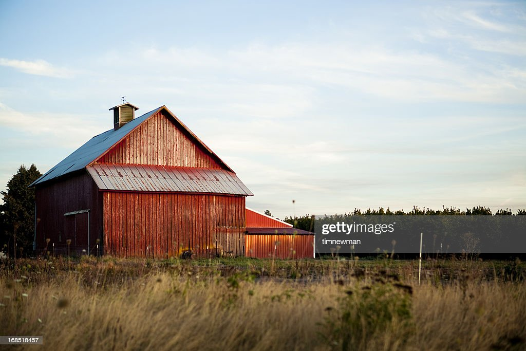 Summer Barn : Stock Photo