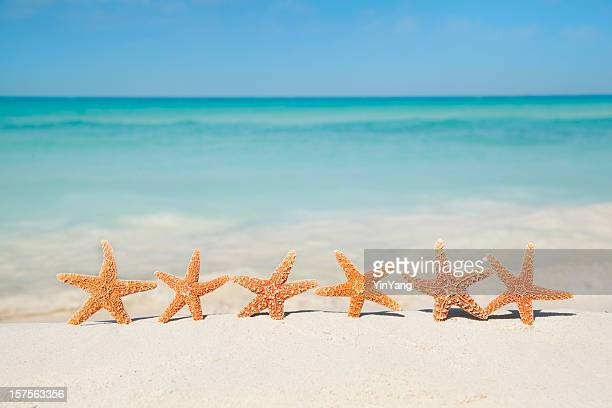 Summer Beach Vacation Holiday, Seashells Starfishes Party on Sand
