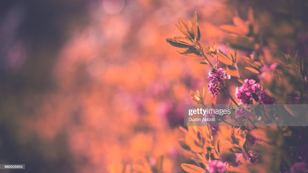 Summer Bouquet : Stock Photo