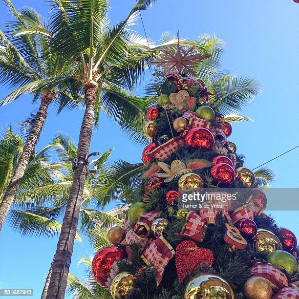 summer christmas - hawaii christmas stock pictures, royalty-free photos & images