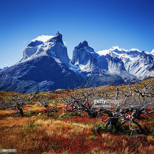 Summer colour in Patagonia National Park