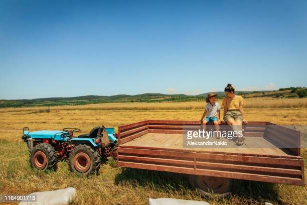 summer day at the farm - agricultural occupation stock pictures, royalty-free photos & images
