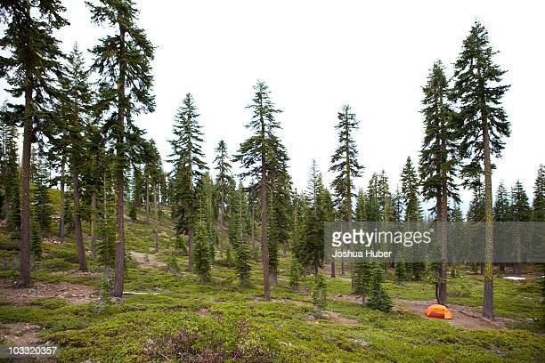a summer day camping at the foot of mt. shasta. - mt shasta stock pictures, royalty-free photos & images
