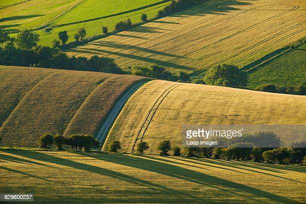 Summer evening on the South Downs Falmer England