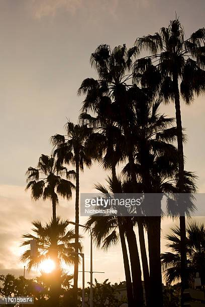 summer evening palm trees - cannes stock pictures, royalty-free photos & images