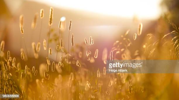 summer feeling - pasture stock pictures, royalty-free photos & images