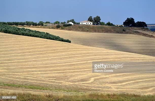 Summer field in summer in Ronda Spain