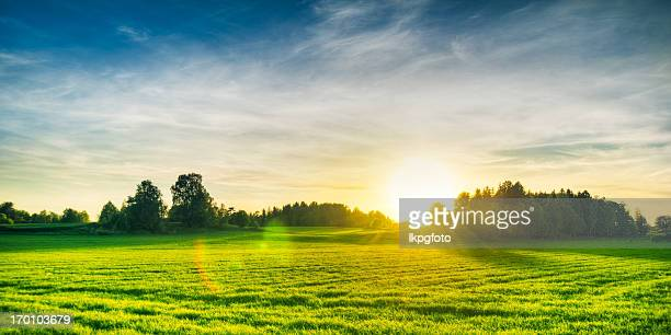 summer field - non urban scene stock pictures, royalty-free photos & images
