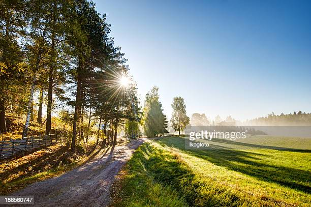summer field - sweden stock pictures, royalty-free photos & images