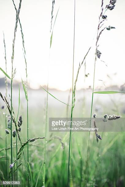 summer field - lise ulrich stock pictures, royalty-free photos & images
