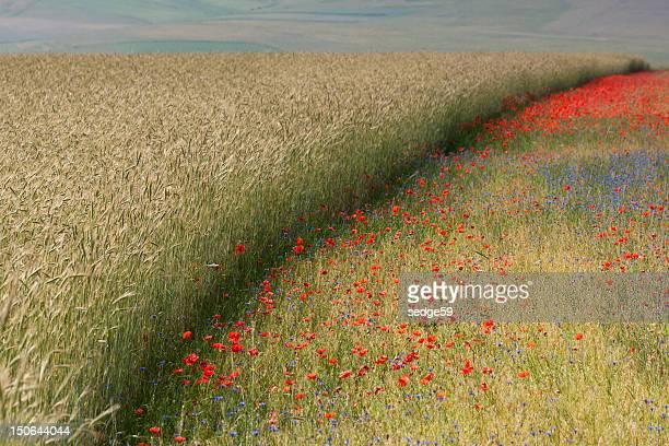Summer fields...