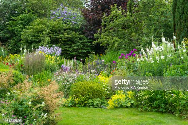 summer flower border in full growth - flowerbed stock pictures, royalty-free photos & images
