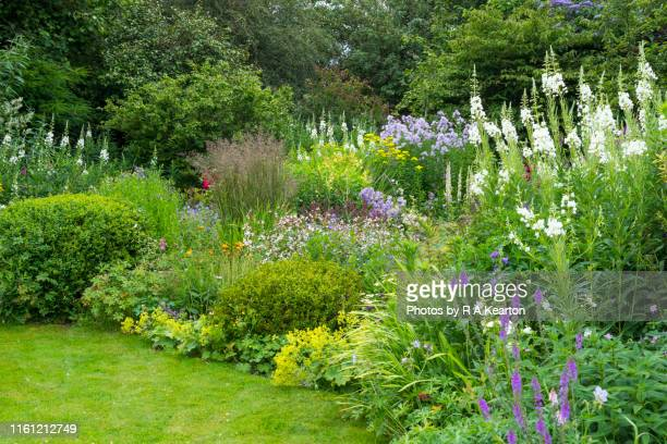 summer flower border in full growth - tree stock pictures, royalty-free photos & images