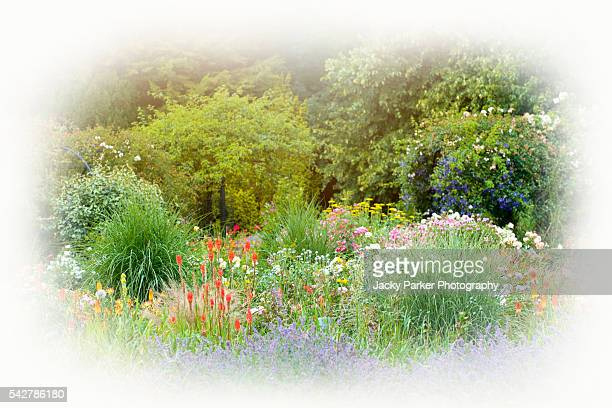 summer flower border - st. albans stock pictures, royalty-free photos & images