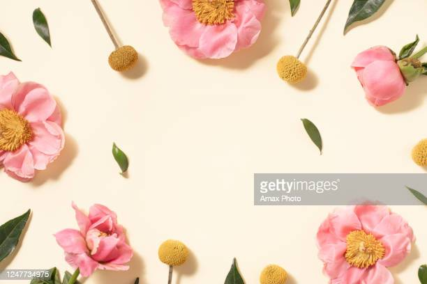 summer flower flat lay on yellow background. top view composition. - flower stock pictures, royalty-free photos & images