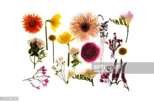 summer flower wallpaper - flower part stock pictures, royalty-free photos & images