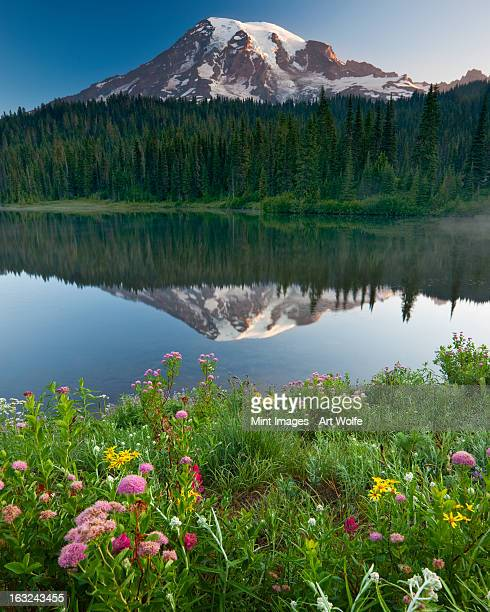 Summer flowers and the landscape of the wilderness area surrounding Mount Rainier, an area called Reflection Lakes.