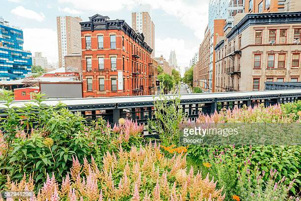 nyc summer flowers in urban high line park with buildings - chelsea new york stock photos and pictures
