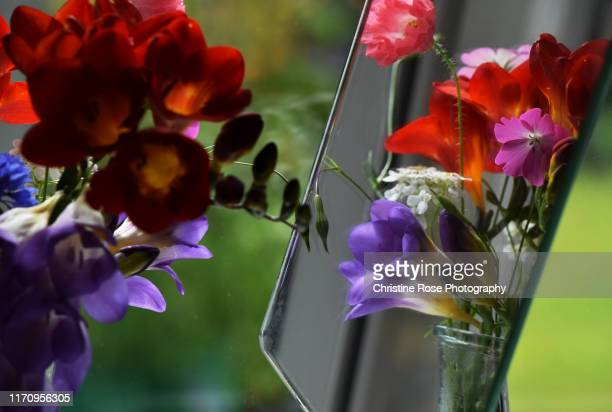 summer flowers - freesia stock pictures, royalty-free photos & images