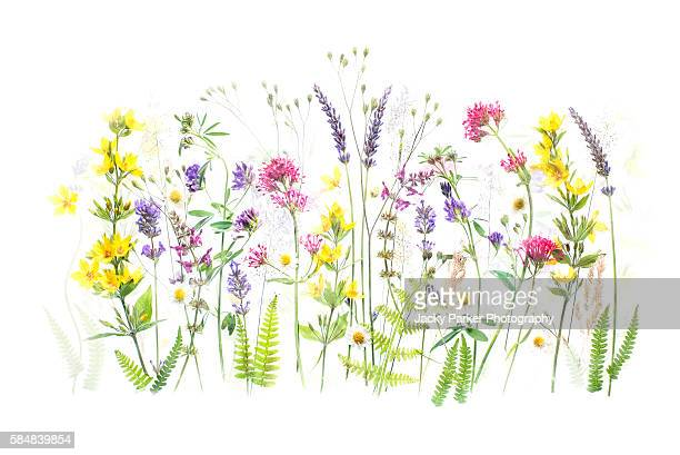 summer flowers - valerian plant stock pictures, royalty-free photos & images