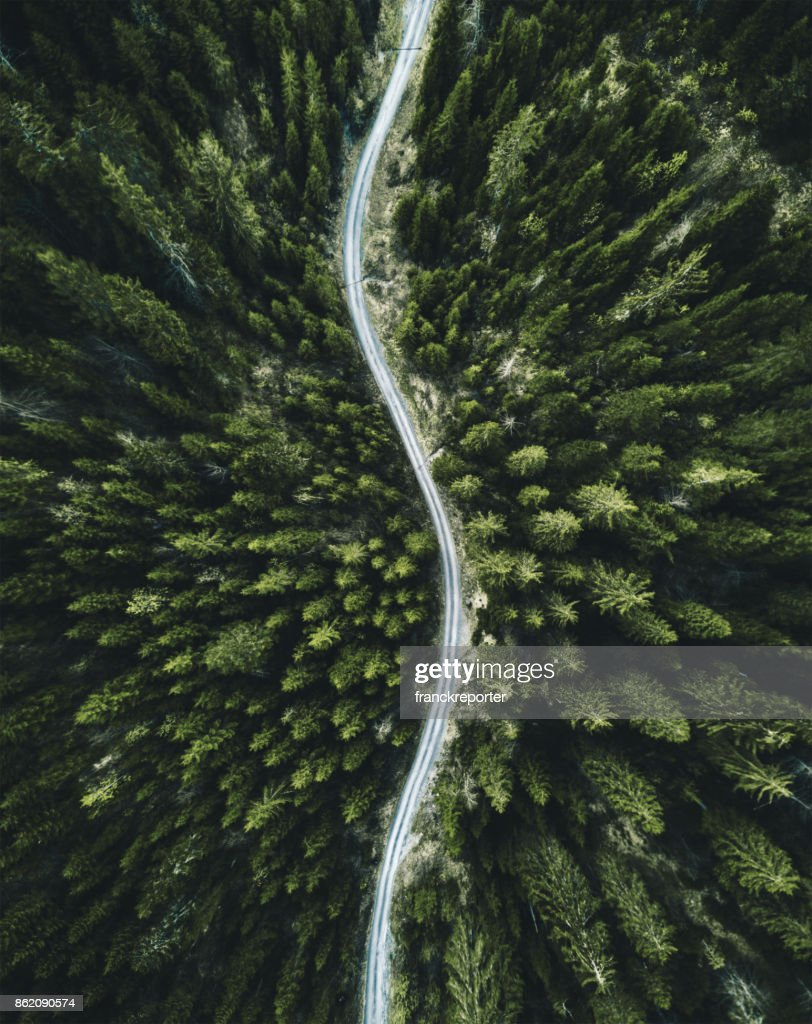 summer forest aerial view in switzerland : Stock Photo