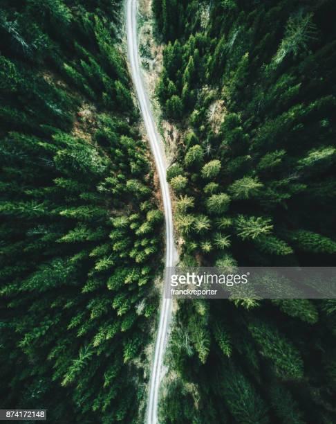 sommer wald luftaufnahme in der schweiz - nationalpark stock-fotos und bilder