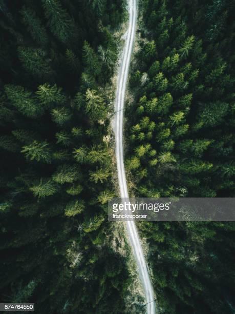 Sommer Wald Luftaufnahme in der Schweiz