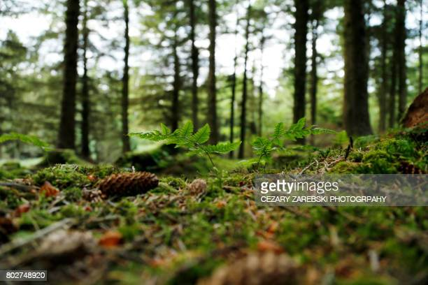 summer forest - deciduous tree stock pictures, royalty-free photos & images