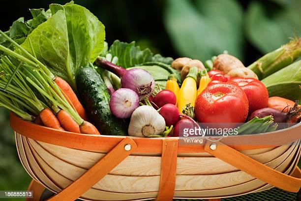 Jardín de vegetales frescas de verano se recolectan variedad en Harvest cesta