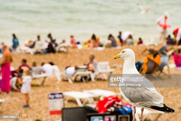 Summer Fun on Brighton Beach
