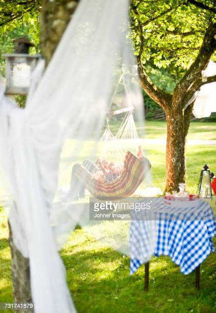 summer garden - mosquito net stock photos and pictures