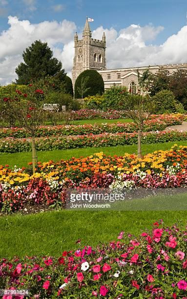summer garden - アマシャム ストックフォトと画像