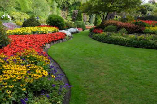 Summer garden 92624397