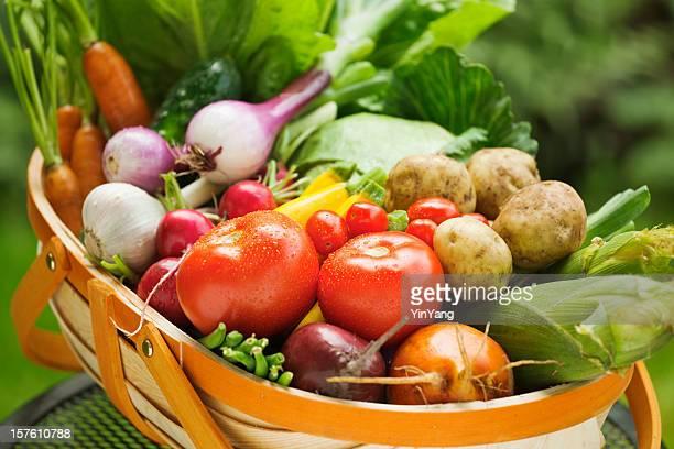 summer gardening harvest of fresh vegetables in market basket - harvest basket stock pictures, royalty-free photos & images
