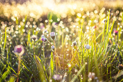 Summer grass field with flowers, abstract background concept, soft focus, bokeh, warm tones 900412110