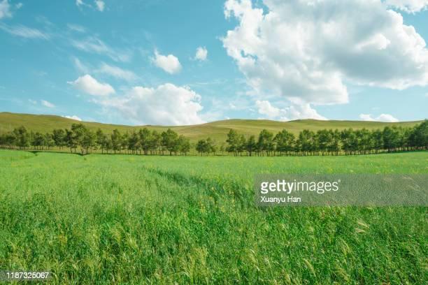 summer green nature landscape - 草原 ストックフォトと画像
