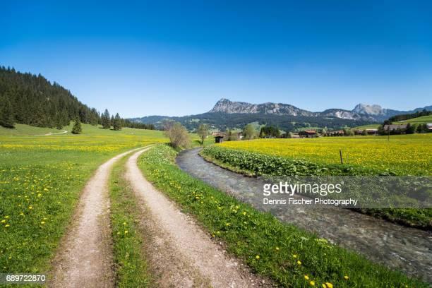 Summer greens in the austrian alps