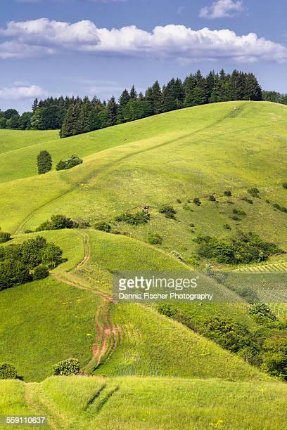 summer hills - schwarzwald stock-fotos und bilder